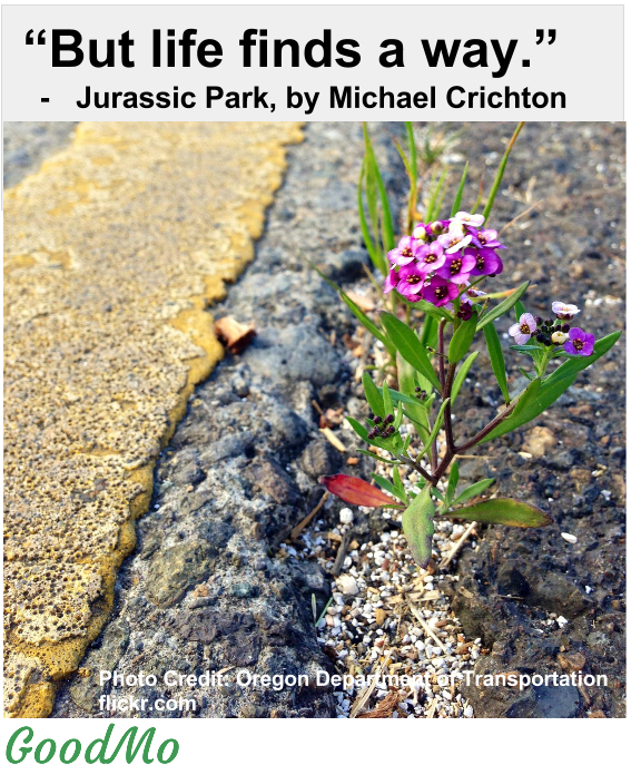 Life Finds a way. Jurassic Park, by Michael Crichton
